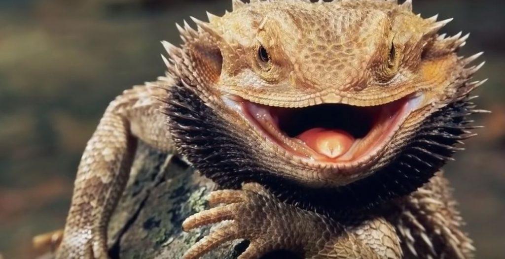 гущер-рептил