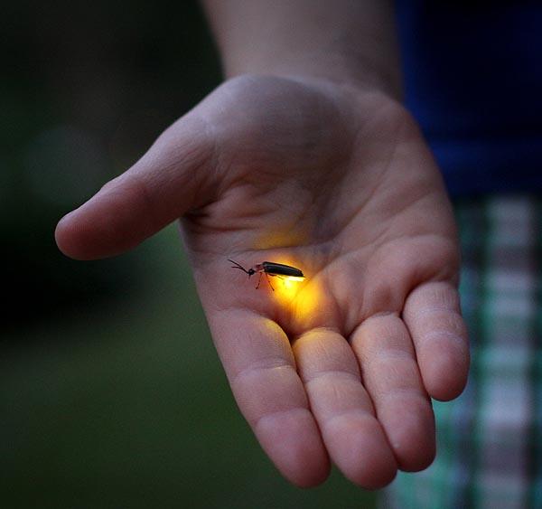 една светулка малко светлина