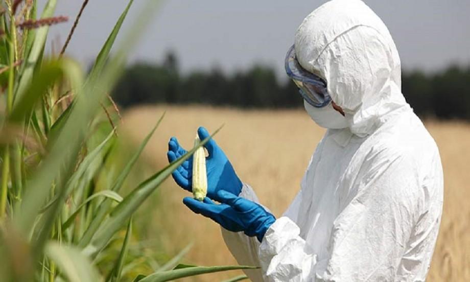 ГМО Генетичната Бомба